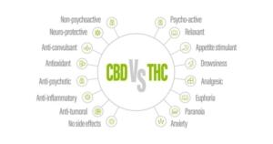 THCとCBDの効果の違いとは?違法性や副作用も含めて徹底比較